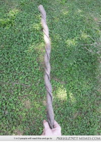 """Life, Memes, and Vine: 1 in 3 people will read this and go to  MUGGLENET MEMES.COM <p>Stick and vine grow together to form real life wand.  <a href=""""http://ift.tt/1O7BY1s"""">http://ift.tt/1O7BY1s</a></p>"""
