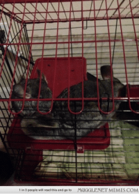 """Memes, How To, and Http: 1 in 3 people will read this and go to  MUGGLENET MEMES.COM <p>Their names are Nagini and Salazar. Nagini has already learned how to get out of her cage within 1 hour of being in it. I think the name fits her nicely <a href=""""http://ift.tt/1pQ2NJD"""">http://ift.tt/1pQ2NJD</a></p>"""