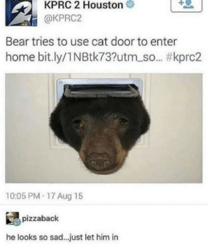 Dank, Memes, and Target: 1  KPRC 2 Houston  @KPRC2  Bear tries to use cat door to enter  home bit.ly/1 N Btk73?utm_so.. #kprc2  10:05 PM 17 Aug 15  pizzaback  he looks so sad.. just let him in Let him in by 28_stab_wounds MORE MEMES