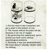 Mouse, Oxygen, and Photosynthesis: 1. Put two mice in two containers, but  put a plant in the bottom of one.  2. The mouse without the plant will die  becauseit ran out of oxygen.  3. By performing this experiment, we've  proven you have some serious  psychological problems.  4. Seriously, it was just photosynthesis.  We knew about it already. Herbert died  for nothing.