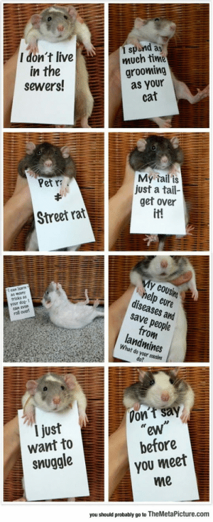 "lolzandtrollz:  Rats Are So Misunderstood: 1 spend as  much time  grooming  as your  cat  I don't live  in the  sewers!  My tail is  just a tail-  get over  it!  Pet  Street rat  My cousins  help cure  diseases and  save people  from  landmines  ean learn  wany  tricks as  your  evan  roll over  What do your cousins  do?  Don't say  ""ew""  before  I just  want to  you meet  me  snuggle  you should probably go to TheMetaPicture.com lolzandtrollz:  Rats Are So Misunderstood"