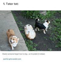a loaf of bread - Max textpost textposts: 1. Tater tot:  Clearly someone forgot how to dog... so he potato' d instead.  just-for-grins.tumblr.com a loaf of bread - Max textpost textposts