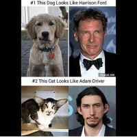 9gag, Adam Driver, and Harrison Ford:  #1 This Dog Looks Like Harrison Ford  VIA 9GAG.COM  #2 This Cat Looks Like Adam Driver This is amazing😂 starwarsfacts