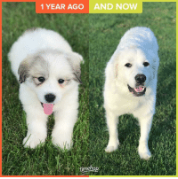 awws: 1 YEAR AGO  AND NOW