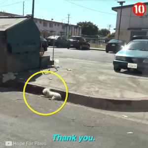 Memes, Thank You, and Hope: 10)  0ow205  Thank you  Hope For Paws This dog was left for dead on the roadside, but thankfully kindhearted people came to the rescue 🙏
