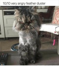 Funny, Animal, and Pictures: 10/10 very angry feather duster 26 Funny Animal Pictures Of The Day