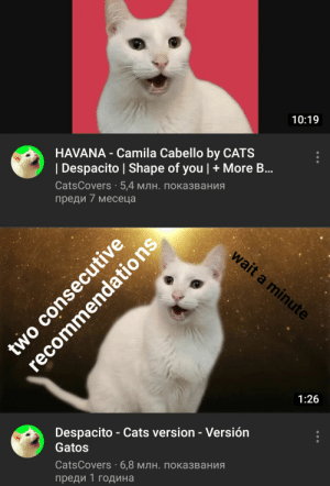 Cats illuminates: 10:19  HAVANA - Camila Cabello by CATS  | Despacito | Shape of you | + More B..  CatsCovers - 5,4 млн. показвания  преди 7 месеца  wait a minute  1:26  Despacito - Cats version - Versión  Gatos  CatsCovers : 6,8 млн. показвания  преди 1 година  two consecutive  recommendations Cats illuminates
