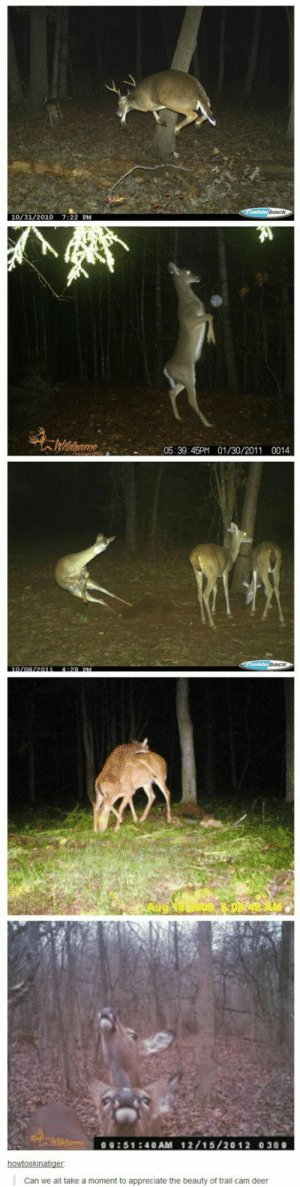 Deer, Appreciate, and Cam: 10/31/2010 7:22 PM  05:39:45PM 01/30/20110014  09:51240AM 12/15/2012 0389  Can we all take a moment to appreciate the beauty of trail cam deer Oh Deer