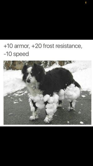 .: +10 armor, +20 frost resistance,  -10 speed .