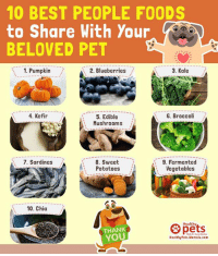"""Love, Memes, and Thank You: 10 BEST PEOPLE FOODS  to Share With Your  BELOVED PET  1. Pumpkin  2. Blueberries  3. Kale  4. Kefir  ,-_-5. Edible  G. Broccoli  Mushrooms  8. Sweet  Potatoes  9. Fermented  Vegetables  7. Sardines  10. Chia  pets  Healthy  THANK  YOU  HealthyPets.Mercola.com """"Dog-friendly"""" people foods that your pet might  love:"""