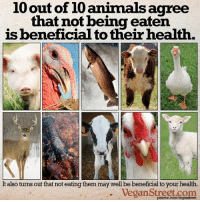 """Animals, Facebook, and Food: 10 out of 10 animals agree  that not being eaten  is beneficial to their health.  It also turns out that not eating them may well be beneficial to your health.  Vegan Street.com  patreon.com/veganstreet Not eating animals is beneficial to them, to us and to the planet. When we stop commodifying animals, we will begin to reap benefits that will save all of us.  ---> How """"food animals"""" are treated: http://bit.ly/1lJUprP ---> Benefits to our health by moving away from animal-based """"foods"""": http://bit.ly/1mXSd1V ---> The benefits to our environment: http://bit.ly/1Dyaivk  https://www.facebook.com/VeganStreet https://www.patreon.com/VeganStreet"""