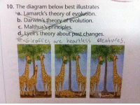RT @SchooIAnswer:: 10. The diagram below best illustrates  sa. Lamarck's theory of evo  On  b. Darwin's theory of evolution  c. Malthus's principles.  d. by ell's theory about past changes.  e Gicoffes are heartless creatwres, RT @SchooIAnswer: