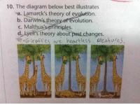 ~dadmin: 10. The diagram below best illustrates  sa. Lamarck's theory of evolution  b. Darwin's theory of evolution.  c. Malthus's principles.  d, kyett's theory about past changes.  e Giraffes are heartless creatwres. ~dadmin