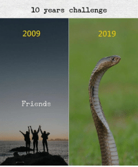 Friends, 10 Years, and Challenge: 10 years challenge  2009  2019  Friends
