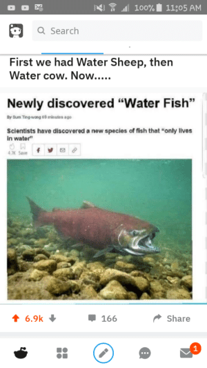 """Sorry but its not mine but it was so funny till i see it😂😂: 100% 11;05 AM  a Search  First we had Water Sheep, then  Water cow. Now....  Newly discovered """"Water Fish""""  By Sum Ting-wong 69 minutes ago  Scientists have discovered a new species of fish that """"only lives  in water""""  f  4.7K Save  6.9k  Share  166  1 Sorry but its not mine but it was so funny till i see it😂😂"""