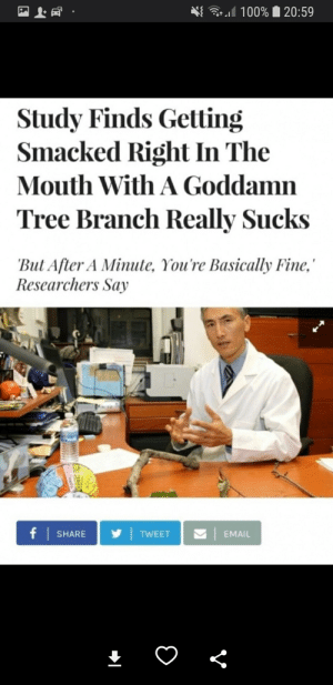 """Email, Tree, and Tweet: 100% 20:59  Study Finds Getting  Smacked Right In The  Mouth With A Goddamn  Tree Branch Really Sucks  """"But After A Minute, You're Basically Fine,  Researchers Say  f SHARE  TWEET  EMAIL  V"""