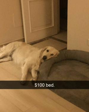 Animals, Funny, and Memes: $100 bed. 42 Funny Dog Memes That'll Make Your Day! - Lovely Animals World