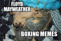 Boxing Memes be sucking Mayweather nuts like: FLOYD  MAYWEATHER  BOXING MEMES  Dirty Button.com Boxing Memes be sucking Mayweather nuts like