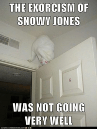 Grumpy Cat, Jones, and Snowiness: THE EXORCISM OF  SNOWY JONES  WAS NOT GOING  VERY WELL