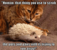 """Run, Scrubs, and Grumpy Cat: """"Human, that thing you use to scrub  the Dots and Dans with is trying to  run away!'"""
