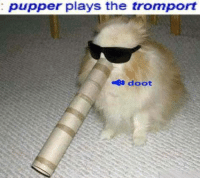 Puppers: pupper plays the tromport  doot