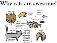 Cats, Food, and Funny: Why cats are awesome!  Pests are  They look  a food  X-men  happy  source  claws  They arent loud  Their  purring can put  you in a gentle  slumber  They jump  T Floppy  Their tails  really really  are  really high,  I  without any  effort...they  are all like  I  entertaining  little funny  to watch  supermen