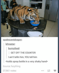 ahold: opalescentdragon:  lehrastar:  bunny food:  GET OFF THE COUNTER  I ain't tellin him, YOU tell him  Aholds spray bottle in a very shaky hand  Source: fury thing  27,961 notes