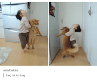 awwdorables:  ong cat too long