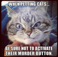 Petting Cat: WWHEN PETTING CATS.L  BE SURE NOT TO ACTIVATE  THEIR MURDER BUTTON