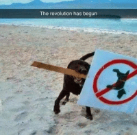 Rise of the doggos: The revolution has begun Rise of the doggos