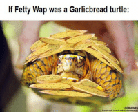 Like our backup page Garlic Bread Memes II: Turtle Valhalla Follow our Instagram: @GBMEMES: If Fetty Wap was a Garlicbread turtle:  @GBMEMES  Facebook.com/Garlicbreadmemes Like our backup page Garlic Bread Memes II: Turtle Valhalla Follow our Instagram: @GBMEMES