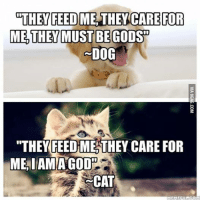 """feed me: THEY FEED ME THEY CARE FOR  ME THEY MUST BE GODS  DOG  """"THEY FEED ME THEY CARE FOR  MEAIAMAGODH  CAT  MEME EULECOM"""