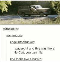 Memes, Omg, and Supernatural: 10thcloctor:  nonymoose  angelinthebunker:  I paused it and this was there.  No Cas, you can't fly.  the looks like a burrito >>>>>>><<<<<<< Dios mío - Omg - - 😂😂 - - deanwinchester samwinchester castielnovak jensenackles jaredpadalecki mishacollins destiel sabriel supernatural sobrenatural supernaturalfamily familiasobrenatural fandom carryonmywaywardson spnseason12 spn spnfandom