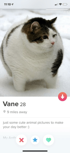 Wholesome tinder profile: 11:10  Vane 28  9 miles away  just some cute animal pictures to make  your day better :)  My Anth Wholesome tinder profile