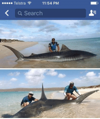 WHAT A CATCH  Incredible photos of two huge sharks caught north of Carnarvon are going viral on social media. The fishermen have told Perth Now they took great care in releasing the sharks - a hammerhead and a tiger - back into the water after the photos were taken. Hear from one of the men in 9 News after the cricket.  Pics: Josh Butterworth/Perth Now: 11:54 PM  Telstra  a Search WHAT A CATCH  Incredible photos of two huge sharks caught north of Carnarvon are going viral on social media. The fishermen have told Perth Now they took great care in releasing the sharks - a hammerhead and a tiger - back into the water after the photos were taken. Hear from one of the men in 9 News after the cricket.  Pics: Josh Butterworth/Perth Now