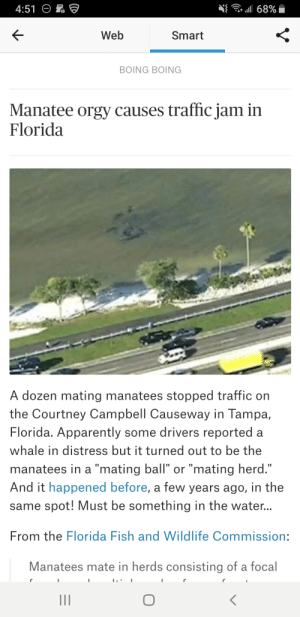 """Apparently, Orgy, and Traffic: .11 68%  K-  Web  Smart  BOING BOING  Manatee orgy causes traffic jam in  Florida  A dozen mating manatees stopped traffic on  the Courtney Campbell Causeway in Tampa,  Florida. Apparently some drivers reported a  whale in distress but it turned out to be the  manatees in a """"mating ball"""" or """"mating herd  And it happened before, a few years ago, in the  same spot! Must be something in the water...  From the Florida Fish and Wildlife Commission  Manatees mate in herds consisting of a focal"""