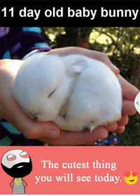 Bunnies, Memes, and 🤖: 11 day old baby bunny  a The cutest thing  you will see today.