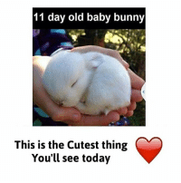 11 day old baby bunny  This is the Cutest thing  You'll see today 😲😍