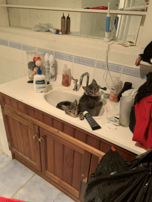 Foster kittens Lavender and Ron just chillin in the sink: 111  रर  Rexona  Rexo  Mona  class  FOAMING  PALMOLIVE  OAMING  NOURISHING  THOMSSAAMD  Cetaphil  Gentle Skin Cleanser Foster kittens Lavender and Ron just chillin in the sink