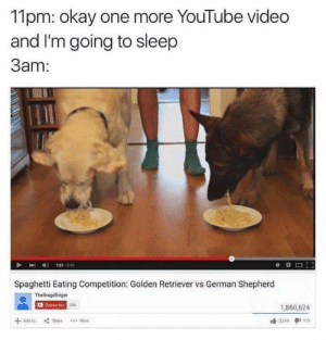 youtube.com, German Shepherd, and Golden Retriever: 11pm: okay one more YouTube video  and I'm going to sleep  3am:  157/241  Spaghetti Eating Competition: Golden Retriever vs German Shepherd  TheBragdBirger  Subsorbe 206  1,860,624  3249 113  +  Add to  Mote me_irl