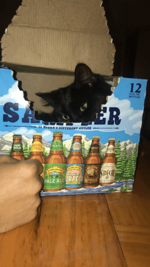 My boyfriends kitten hiding in her box plotting her next attack: 12  12 FL. OZ  BOTTLES  SA  ER  12 BEERS 6 DIFFERENT STYLES  HELLES  Tropics  TORPEOO  IPA  HOP  SOLO  PALE ALE  THLES  SIDECAR  SERRA NEVR  SIDECHR  GIERRA NEVRD  hopieal  RUTHLESS  PALE ALE URPEOD My boyfriends kitten hiding in her box plotting her next attack