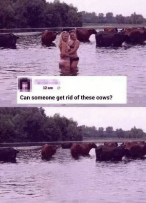 Funny, Can, and Via: 12 ore  Can someone get rid of these cows? Fixed it for ya via /r/funny https://ift.tt/2zJtdYJ