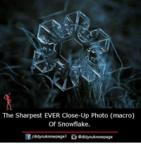 Memes, 🤖, and Photo: 12  The Sharpest EVER Close-Up Photo (macro)  Of Snowflake.  f/didyouknowpagel @didyouknowpage