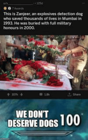 Dogs, Memes, and Military: 125d  7Auards  This is Zanjeer, an explosives detection dog  who saved thousands of lives in Mumbai in  1993. He was buried with full military  honours in 2000.  Share  t107k  WE DON'T  DESERVE DOGS 100 20 trending memes in pinterse {PART 5}