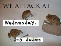 My Dudes: WE ATTACK AT  Wednesday  my dudes