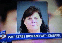 Husband Meme: Ba  SP WIFE STABS HUSBAND WITH SOUIRREL  PINELLAS