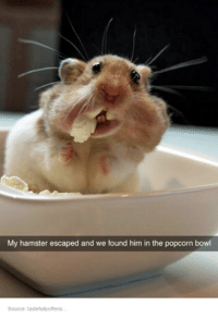 - Pip: My hamster escaped and we found him in the popcorn bowl  Source: tastefully offens. - Pip