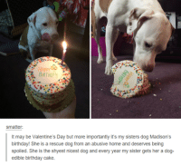 - Pip: BIRTHDAr  smatter  t may be Valentine's Day but more importantly it's my sisters dog Madison's  birthday! She is a rescue dog from an abusive home and deserves being  spoiled. She is the shyest nicest dog and every year my sister gets her a dog  edible birthday cake - Pip