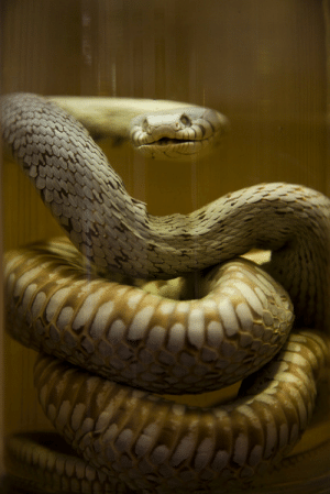 Tumblr, Blog, and Flickr: 12seas:  Anyone for pickled snake? by mortimerphotographic on Flickr.