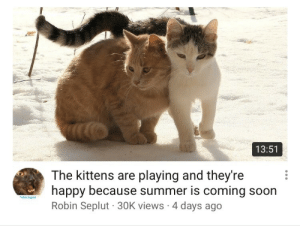 Soon..., Summer, and Happy: 13:51  The kittens are playing and theyre  happy because summer is coming soon  Robin Seplut 30K views 4 days ago  obin Seplu